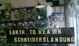 koala_landed