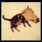 horscat